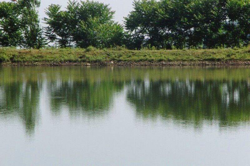 خبرنگاران یک هزار و 200 هکتار از آب بندان های گیلان بهسازی شد