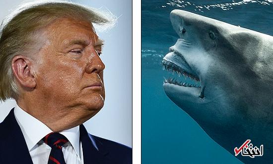 شباهت ترامپ به یک حیوان سوژه شد