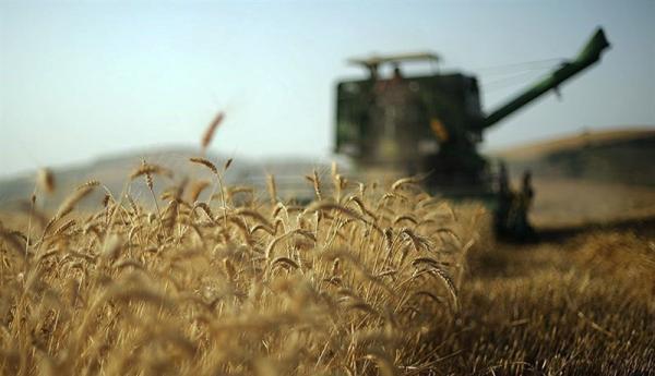 1.5 میلیون تن گندم از کشاورزان خریداری شد