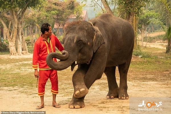 سوء استفاده از حیوانات در صنعت گردشگری